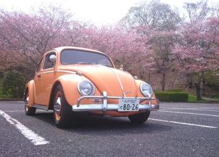 水戸の桜は終わっちゃったね。