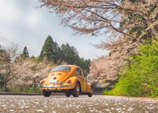 ビートルちゃんと花見ドライブ