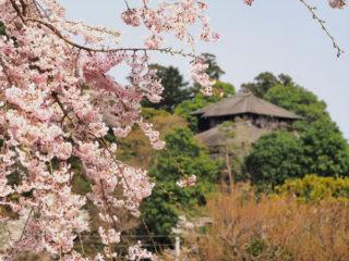 桜の下で日本酒呑みたいぞ~ だれかぁ~来年は一緒に呑も!