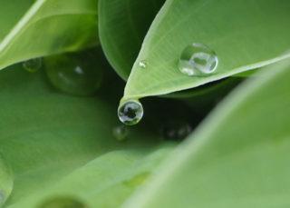 雨上がりに葉っぱに近付いてみると面白い世界があるから~楽しい。