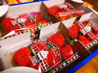 宮城県山元町の苺 マジ美味し!