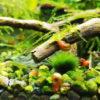 マリモの様な物体が現れる水槽