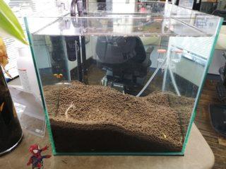 30cmキューブ水槽 水槽立ち上げ48週間目