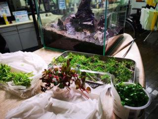 目指せ!赤と緑のモフモフ水草 30cmキューブ水槽 part1