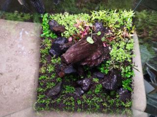 新しい30cmキューブ水槽の水草ラインナップ