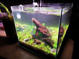 目指せ!赤と緑のモフモフ水草 30cmキューブ水槽 part2