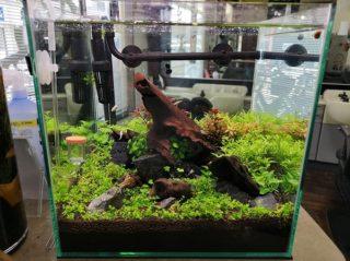 30cmキューブ水槽 シーズン2 赤と緑のモフモフ水草  立ち上げ1週目