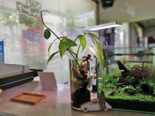 30cmキューブ水槽の横にある細長いボトルの中にはエビちゃんが暮らしています。