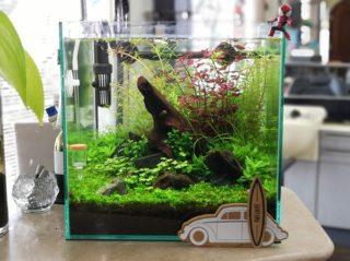 30cmキューブ水槽 シーズン2 赤と緑のモフモフ水草  立ち上げ9週目