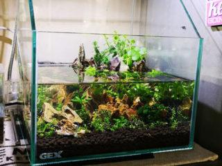 水中葉と水上葉の水槽