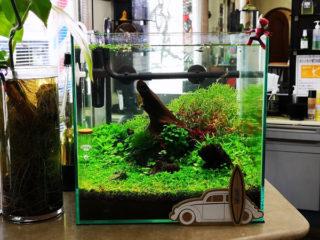 30cmキューブ水槽 シーズン2 赤と緑のモフモフ水草  トリミング4回目