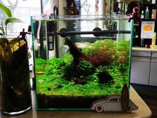 30cmキューブ水槽 シーズン2 赤と緑のモフモフ水草  立ち上げ20週目