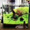 30cmキューブ水槽 シーズン2 赤と緑のモフモフ水草  立ち上げ24週目