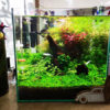 30cmキューブ水槽 シーズン2 赤と緑のモフモフ水草  立ち上げ26週目