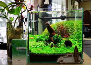 30cmキューブ水槽 シーズン2 赤と緑のモフモフ水草  立ち上げ27週目