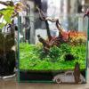 30cmキューブ水槽 シーズン3 一年中紅葉している水草水槽 1週目