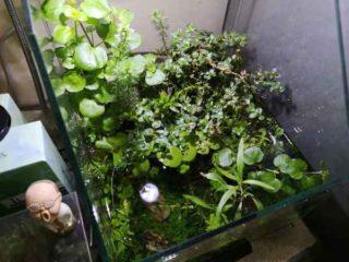 ジャングル化した水槽