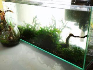 水草ストック用水槽のお掃除