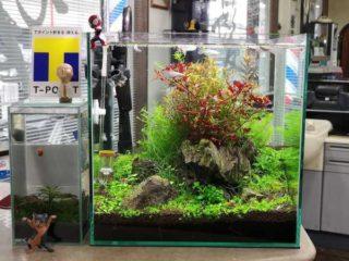30cmキューブ水槽 シーズン4 一年中新緑一部紅葉水草水槽 5週目